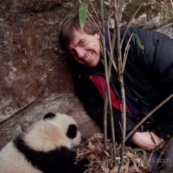 Adrian Warren With Giant Panda (juvenile), China