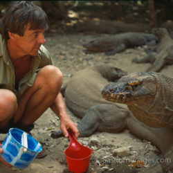Adrian Warren And Komodo Dragon, Komodo Island