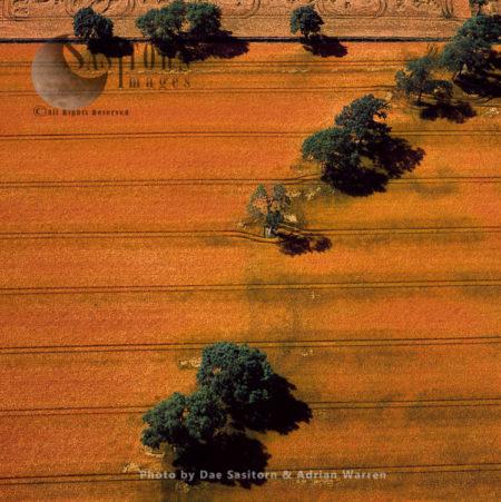 Barley Fields Near Barra Hill, Inverurie, Aberdeenshire, Scotland
