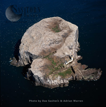 Bass Rock And Its Gannet Colony (an Island In The Outer Part Of The Firth Of Forth, Scotland