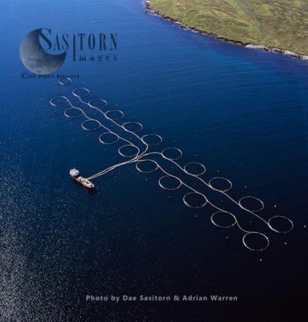 Salmon Farming, East Coast Of Shetland Mainland, Scotland