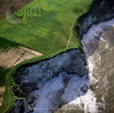 Bempton Cliffs, Yorkshire, England