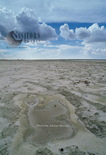 Etosha Pan, A Large Endorheic Salt Pan, Kalahari Basin, Etosha National Park, Namibia