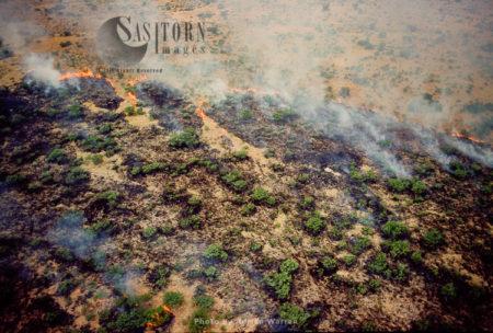 Bush Fire, Etosha National Park, Namibia