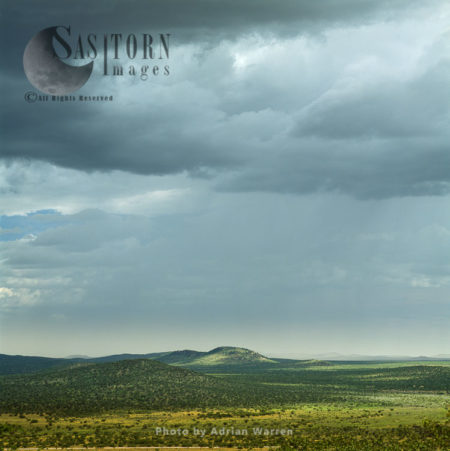Etosha National Park, A Game Reserve, Namibia