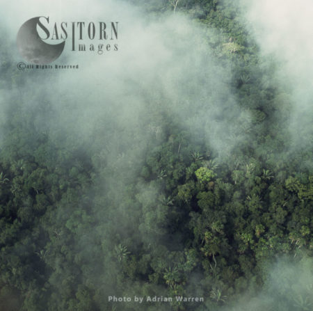 Ecuador Rainforest – Part Of The Amazon Basin, Cononaco Area, South America