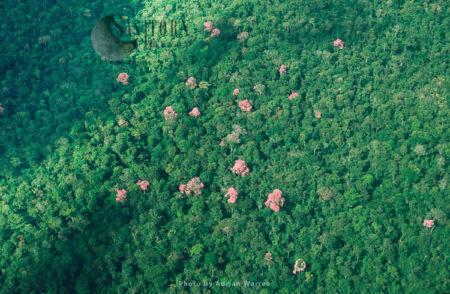 Waorani Indians, Near The Settlement Area, Ecuador Rainforest , Cononaco Area, South America, 1993