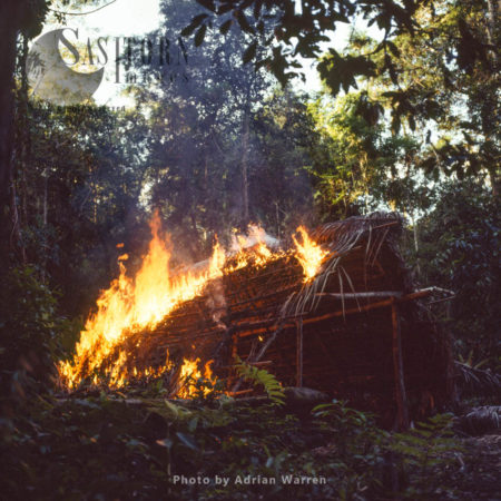 Waorani Indians, Hut Burning Before Moving On, Rio Cononaco, Ecuador, 1983