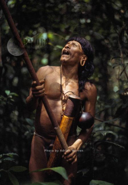 Waorani Indian,  Caempaede Hunting, Cononaco Area, Ecuador, 1983