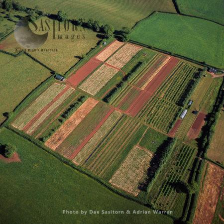 Cultivation Land, East Of Newton Abbot, Devon, England