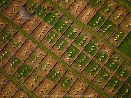 Freerange Chicken Farm, Near Badmi[nton, Gloucestershire