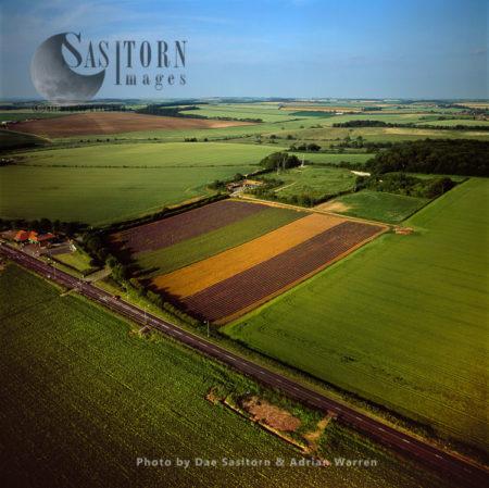 Lavender Fields, Norfolk, East Anglia, England