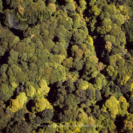 Forest At Creswell Crags, Creswell, Derbyshire, England
