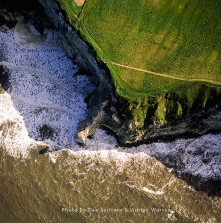 Bempton Cliffs, With Northern Gannet Colony (Morus Bassanus), Yorkshire