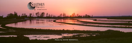 Flooded Cotton Fields Prior To Plantation, Mississippi, USA