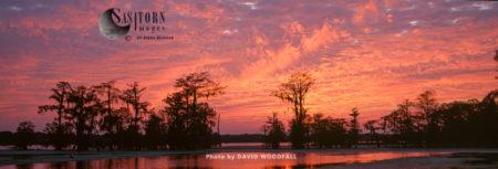 Sunset Over Swamp Cypress Grove, Lake Martin Nature Reserve, Louisiana, USA